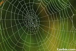 Fábula de la araña y la mariposa